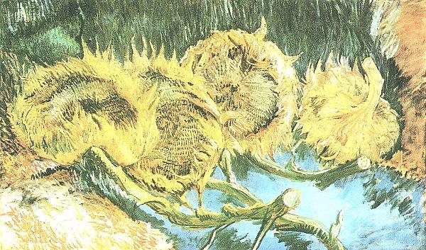 Vier-verbluehte-Sonnenblumen_600